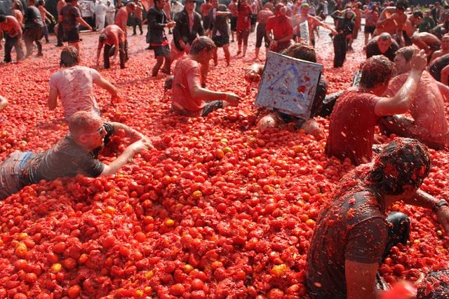 tomatina tavola news