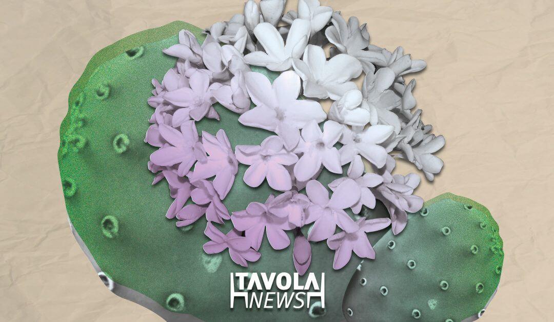 La biznaga de Málaga, una flor que se hace